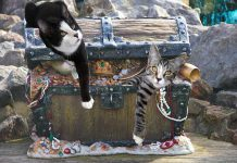 Cats on a treasure chest